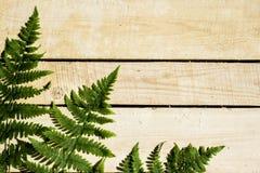 la felce va sulla tavola di legno, luce dura immagine stock libera da diritti