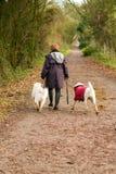La femme âgée par milieu marche ses crabots dans la campagne photo libre de droits