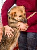 La femme étreint le chien qui s'est accroché à elle, une expression de l'amour et le De Image stock