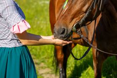 La femme alimente un cheval avec l'animal de favori de mains image stock