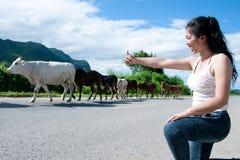 La femme asiatique assez jeune apprécient le jour d'été avec la vache sur une route Photos stock