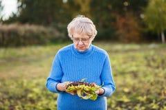 La femme aux cheveux gris de soixante-dix ans nettoie le tournesol mûri photo stock