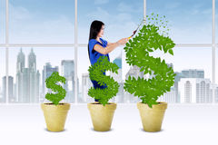 La femme contrôlent la croissance de l'arbre d'argent Image libre de droits