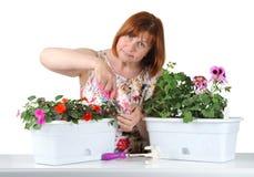 La femme d'une cinquantaine d'années attirante fauche le pélargonium et l'Impatie de cisaillements Image stock
