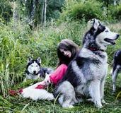 La femme dans la robe rouge avec l'arbre wolfs, forêt, le mystère p de chiens de chien de traîneau Photos stock