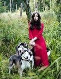 La femme dans la robe rouge avec l'arbre wolfs, queue de forêt Photos libres de droits