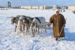 La femme de Nenets mène le traîneau de renne Photographie stock