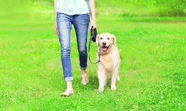 La femme de propriétaire avec le chien de golden retriever marche ensemble au printemps parc Images stock