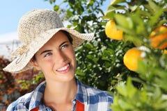 La femme de sourire, s'embranchent avec des mandarines sur l'arbre dans le verger Photographie stock