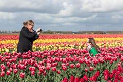 La femme deux prennent des photos dans les domaines colorés de tulipe des Pays-Bas Photographie stock libre de droits
