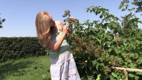 La femme enceinte mange la baie de mûre de la brindille de buisson dans le jardin Photo libre de droits
