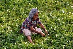 La femme est herbe de découpage Photo stock