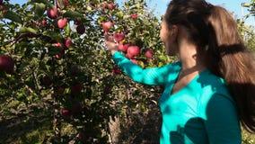 La femme examine le champ de pommiers banque de vidéos