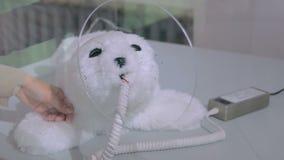 La femme frotte le joint mignon de robot du Japon à l'exposition robotique banque de vidéos