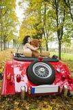 La femme gardent le grand jouet mou d'ours de caresse Images libres de droits