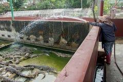 La femme injecte l'eau dans les crocodiles de réservoir photographie stock
