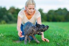La femme joue avec un chien hybride de terrier sur un pré Photographie stock libre de droits
