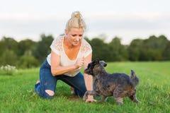 La femme joue avec un chien hybride de terrier sur un pré Image stock