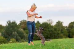 La femme joue avec un chien hybride de terrier sur un pré Image libre de droits