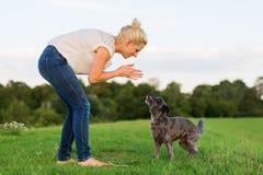 La femme joue avec un chien hybride de terrier sur un pré Images libres de droits