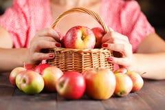 La femme juge un panier en osier plein des pommes rouges Images stock