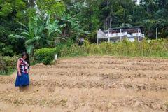 La femme locale de jeunes se tient sur la plantation de thé Photos libres de droits