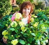 La femme mûre dans le jardin entretient des fleurs Photo stock