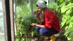 La femme mangent la récolte fraîche de tomate en serre chaude à l'été 4K banque de vidéos