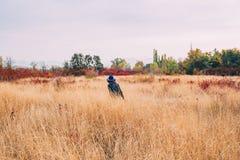 La femme marche dans le domaine à l'automne images stock