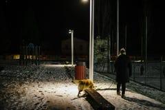 La femme marche la nuit avec le chien sur une laisse allumée par la lumière de Images libres de droits