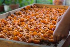 La femme met des moitiés des abricots mûrs pour sécher sur un plateau en bois Photos stock