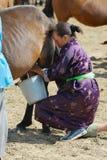 La femme mongole portant la robe traditionnelle trait la jument dans une steppe dans Kharkhorin, Mongolie photos libres de droits