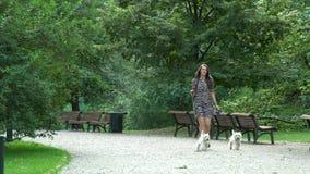 La femme ont une promenade avec deux petits chienchiens blancs dans le parc Tir statique banque de vidéos