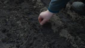 La femme plante des graines dans la terre banque de vidéos