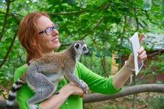 La femme prenant le selfie de photo avec l'anneau a coupé la queue le lémur photographie stock