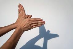 La femme remet créer l'ombre de silhouette de l'animal sur le mur blanc b images stock