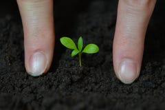 La femme remet planter la petite jeune plante dans le sol noir Jour de terre et concept d'écologie Images stock