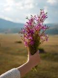 La femme remet tenir l'usine, fleurs, herbes images libres de droits