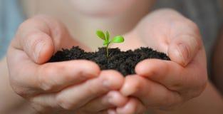 La femme remet tenir la petite jeune plante dans le sol noir Jour de terre et concept d'écologie Images stock