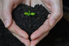 La femme remet tenir la petite jeune plante dans le sol noir Jour de terre et concept d'écologie Photographie stock