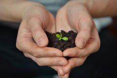 La femme remet tenir la petite jeune plante dans le sol noir Jour de terre et concept d'écologie Image stock