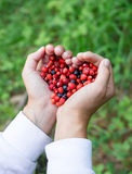 La femme remet tenir les baies fraîches mûres de forêt de poignée dans la forme de coeur Myrtille et fraisier commun dans la paum Photos stock