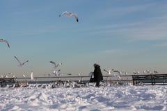 La femme russe alimente les oiseaux Images stock
