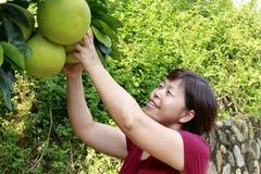 La femme sélectionnent heureusement le pamplemousse de miel Photo stock