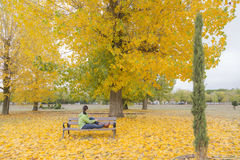 La femme s'asseyant sur un banc de parc avec le jaune laisse la chute des arbres Images stock