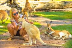 La femme touche le kangourou Photo libre de droits