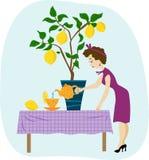 La femme verse le thé de citron image stock