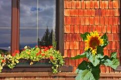 La fenêtre de café avec le grand tournesol Photographie stock