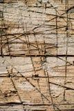 La fente fanent le bois avec différentes nuances et couvert de coupes et d'éraflures profondes Image stock