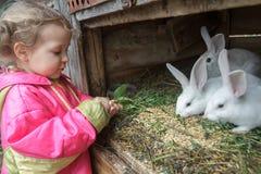 La ferme de alimentation de fille blonde d'élève du cours préparatoire les lapins domestiques avec le fleawort poussent des feuil Photographie stock libre de droits